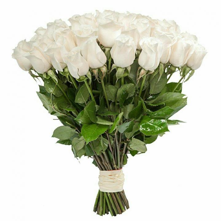 Роза белая